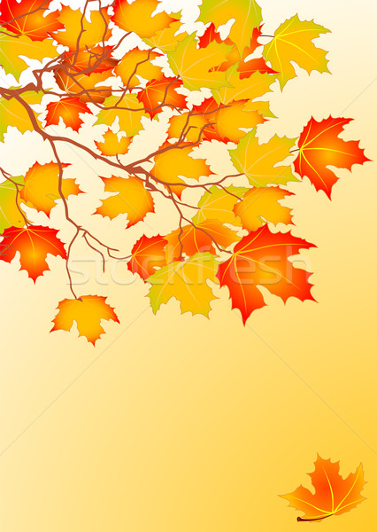 Autumn leaves background Stock photo © Dazdraperma