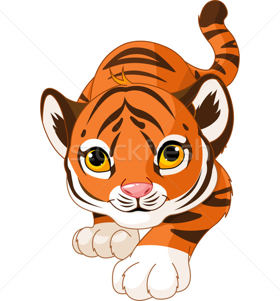 Crouching baby tiger Stock photo © Dazdraperma