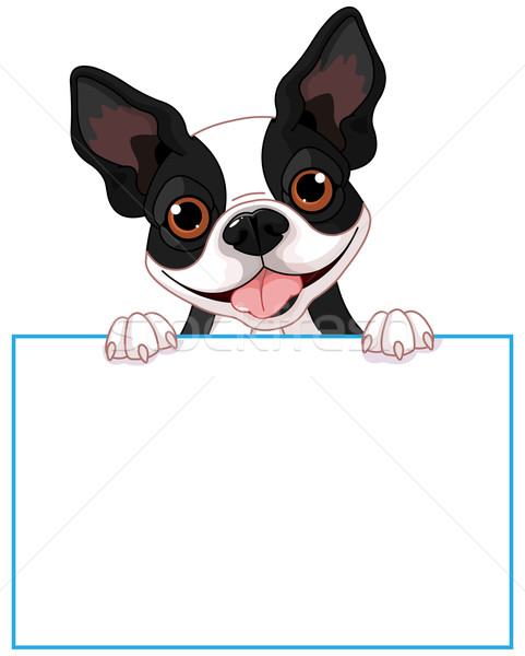 Boston terrier signe cute chien espace Photo stock © Dazdraperma