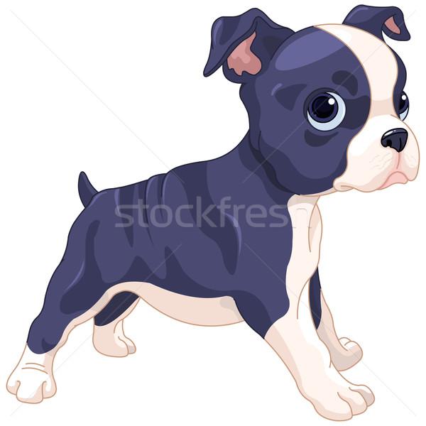 Boston terriër welp illustratie cute hond Stockfoto © Dazdraperma