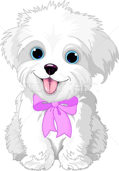 Beyaz sevimli köpek yavrusu poz hayvan Stok fotoğraf © Dazdraperma