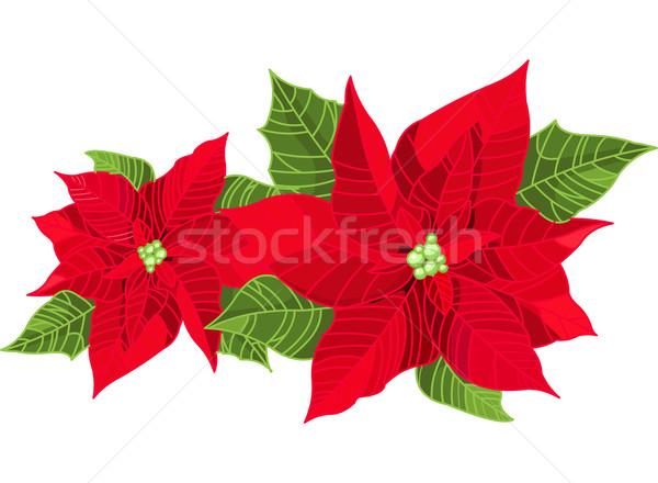 Christmas decoratie bloem geïsoleerd zuiver witte Stockfoto © Dazdraperma