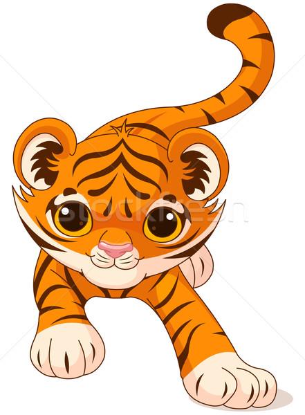 Crouching baby tiger Stock photo © Dazdraperma