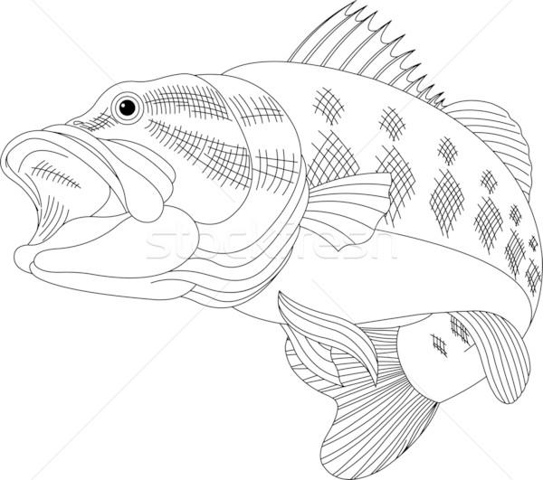 Bas siyah hat örnek balık ağız Stok fotoğraf © Dazdraperma