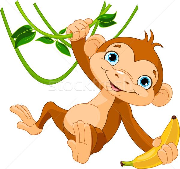 Baby monkey on a tree Stock photo © Dazdraperma