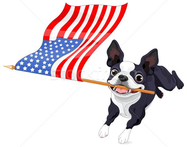 Boston terriër lopen vlag illustratie cute Stockfoto © Dazdraperma