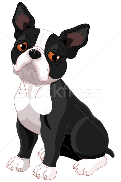 Sad Boston Terrier  Stock photo © Dazdraperma