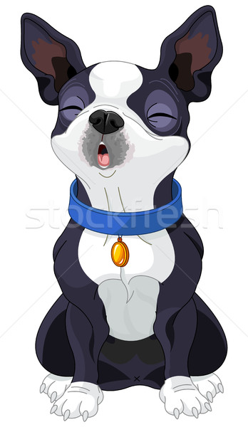 Howling Boston Terrier  Stock photo © Dazdraperma