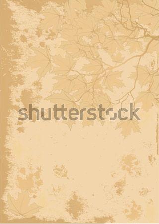 Autumn leaves antique background Stock photo © Dazdraperma
