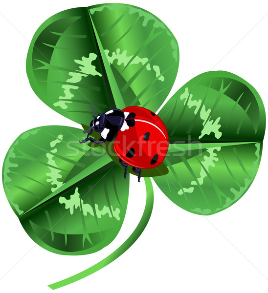 St. Patrick Day Three Leafed Clover and ladybug  Stock photo © Dazdraperma