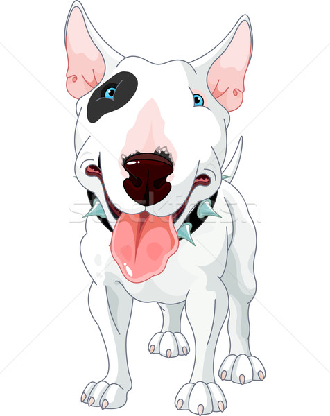 Bull Terrier Stock photo © Dazdraperma