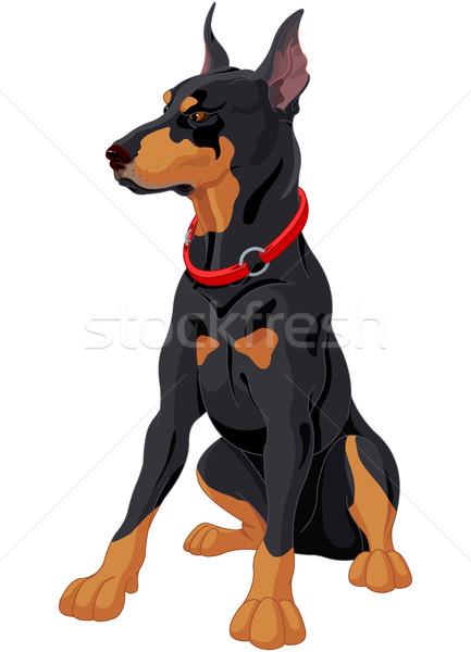 Doberman illustration concentré chien de garde chien animaux Photo stock © Dazdraperma