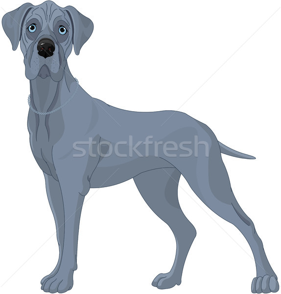 Great Danes Dog Stock photo © Dazdraperma