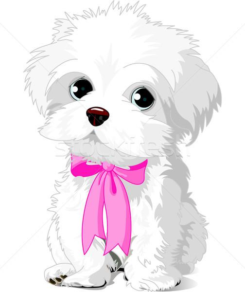 Blanco cachorro cute havanese posando Foto stock © Dazdraperma