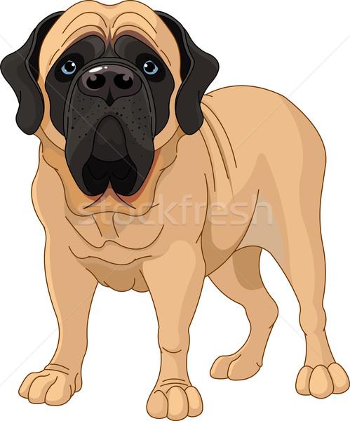английский дог Постоянный белый собака Cartoon Сток-фото © Dazdraperma