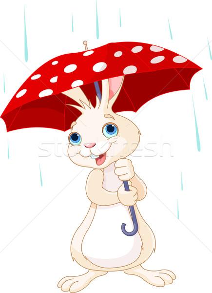 Bunny paraplu cute weinig water gelukkig Stockfoto © Dazdraperma
