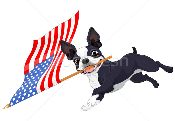 Boston terriër lopen vlag illustratie cute Stockfoto © Dazdraperma