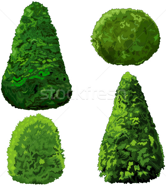Collection of Bushes and Cypress  Stock photo © Dazdraperma
