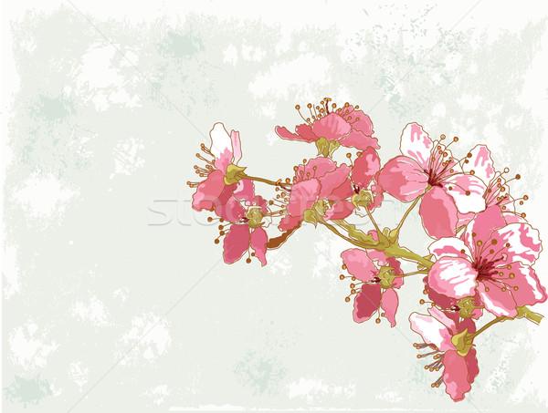 Primavera flor de cerezo Pascua resumen marco pintura Foto stock © Dazdraperma