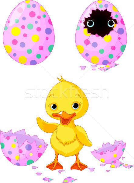 Paskalya ördek yavrusu doğmuş mutlu yumurta komik Stok fotoğraf © Dazdraperma