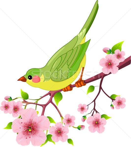 Primavera aves cute sesión flor árbol Foto stock © Dazdraperma