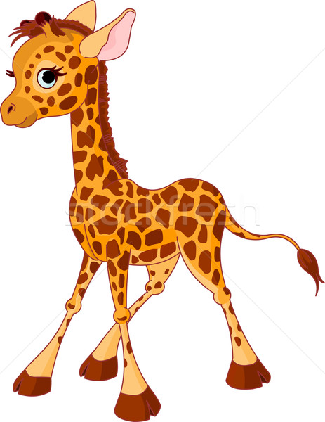Stock photo: Giraffe Calf