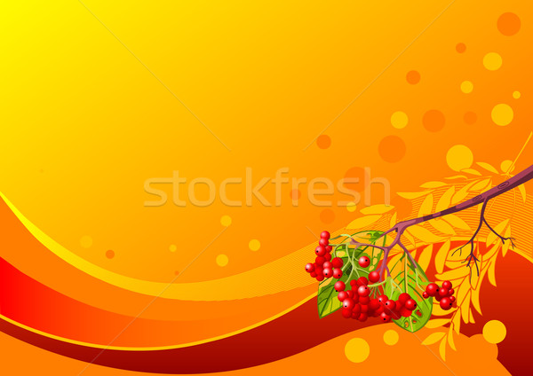 Rowanberry Stock photo © Dazdraperma