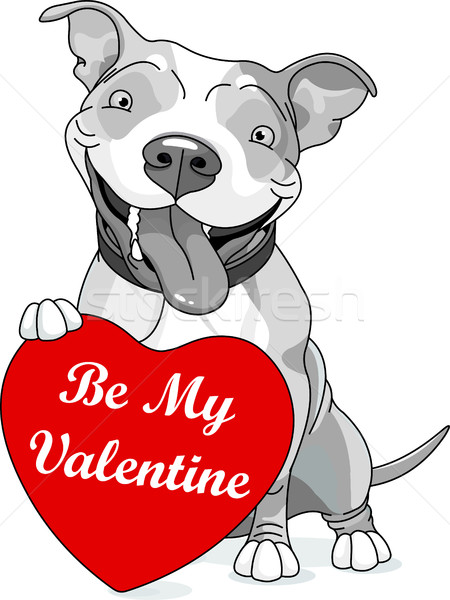 Valentine Pit Bull with Heart Stock photo © Dazdraperma