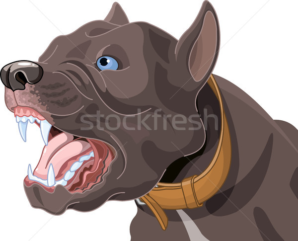 Barking Dog Stock photo © Dazdraperma