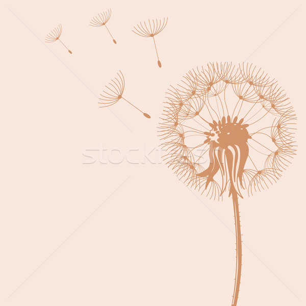 Blow Dandelions Stock photo © Dazdraperma