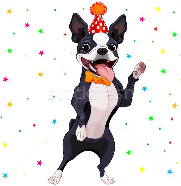 Boston Terrier Party Stock photo © Dazdraperma