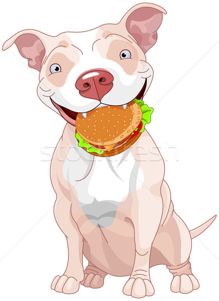 Pit Bull Dog Eats Hamburger Stock photo © Dazdraperma