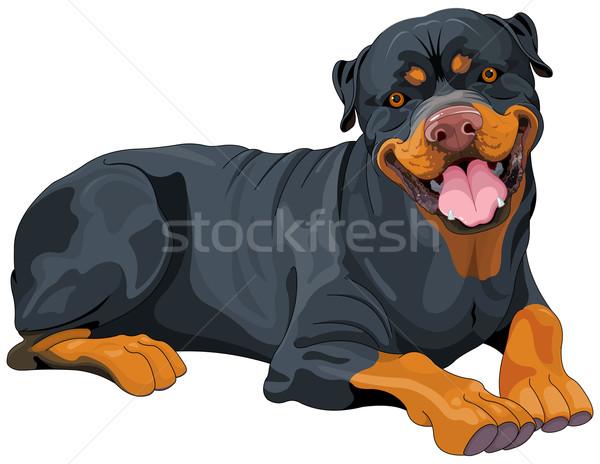 Rottweiler Stock photo © Dazdraperma