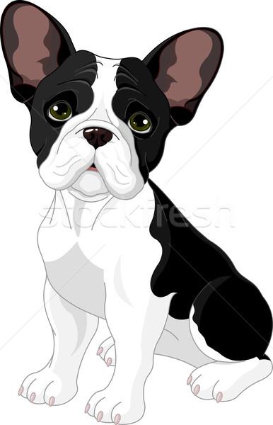 французский бульдог сидят белый собака черный Сток-фото © Dazdraperma