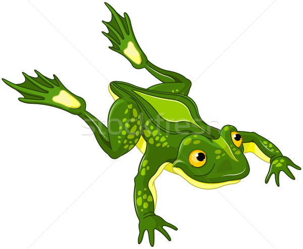Frog  Stock photo © Dazdraperma