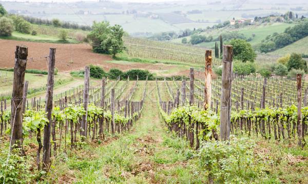 Foto d'archivio: Vigneto · Toscana · farm · oliva · alberi · ovest