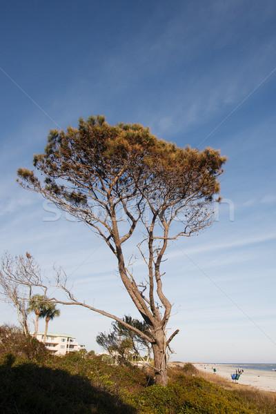 Kiefer Ozean nice blau Strand Stock foto © dbvirago