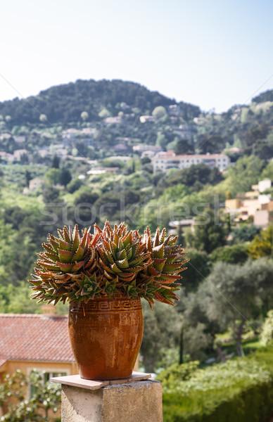 Foto d'archivio: Cactus · pot · meridionale · Francia · jar · francese