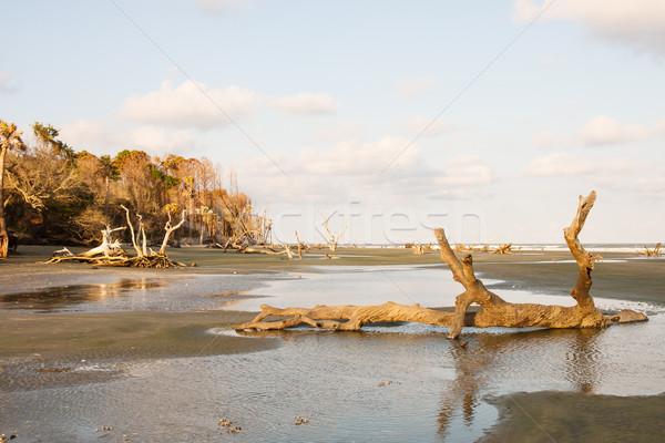 Troncos praia tarde tarde sol Foto stock © dbvirago