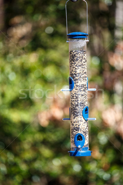Bird Feeder Full of Seed in Forest Stock photo © dbvirago