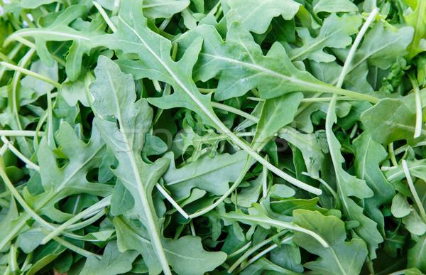 Foto d'archivio: Fresche · foglie · verde · bene · texture