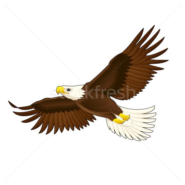 American eagle. Stock photo © ddraw