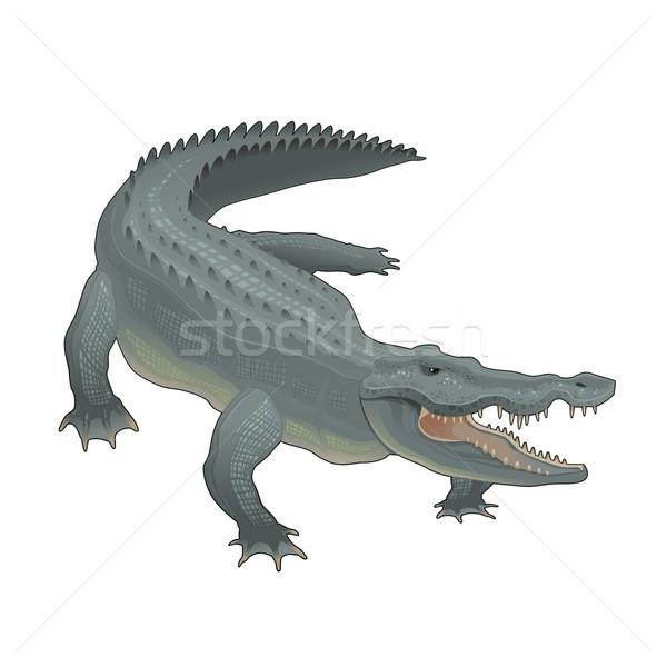 Krokodil vector geïsoleerd dier cartoon afrikaanse Stockfoto © ddraw