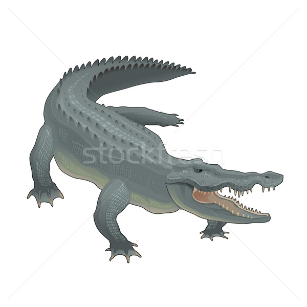 Crocodile Stock photo © ddraw