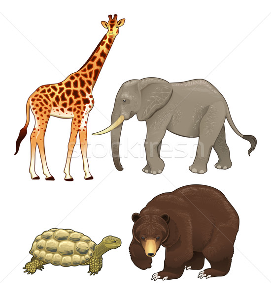 Wild animals. Stock photo © ddraw