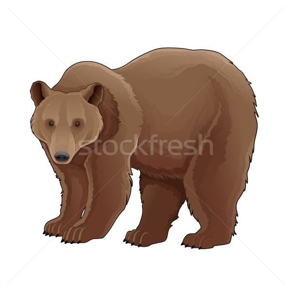Brown bear.  Stock photo © ddraw
