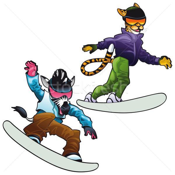 Hayvanlar snowboard vektör yalıtılmış Stok fotoğraf © ddraw