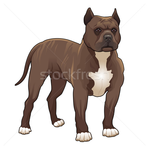 Pitbull vektor izolált kutya boldog fiatal Stock fotó © ddraw