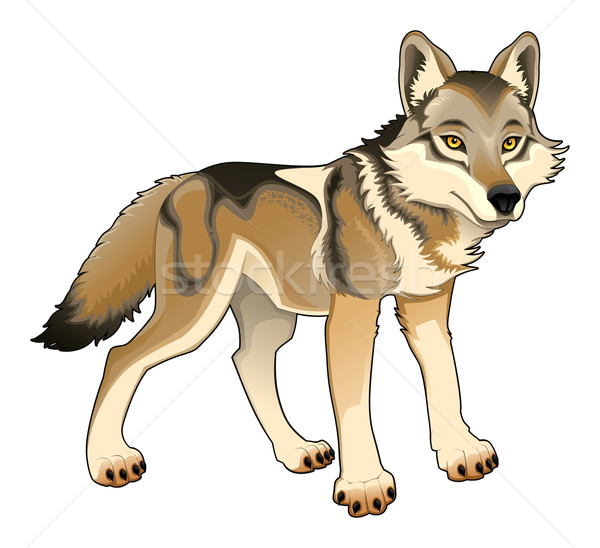 Wolf. Vector isolated character Stock photo © ddraw