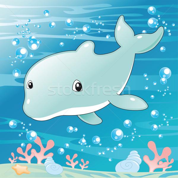 Baby Dolphin. Stock photo © ddraw